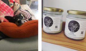 Vegan dog in Pixal-Rose Hair Design and Fluffy Jim vegan hair wax product